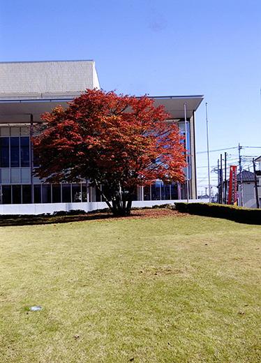 図書館の秋・読書の秋