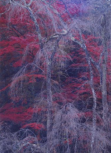 秋色に滝模様