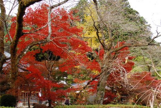 龍珠院の紅葉