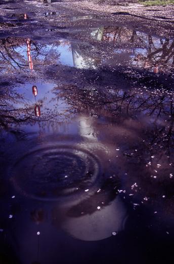 桜まつりの余韻