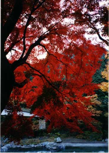 西多摩の紅葉