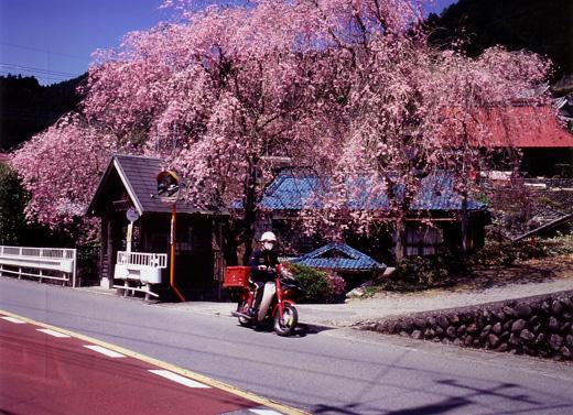 ひのはら桜便