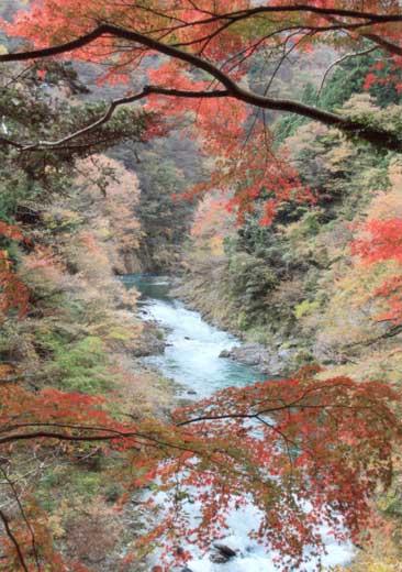 渓谷の秋①