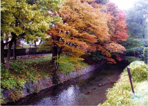 秋の玉川上水寸景