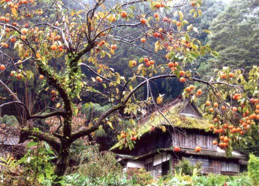 山里の古民家