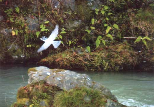 渓流の稲妻