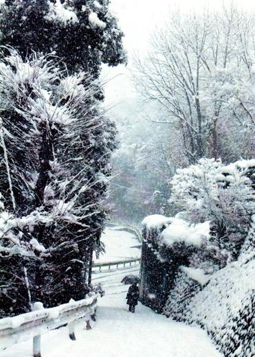 雪の雨乞坂
