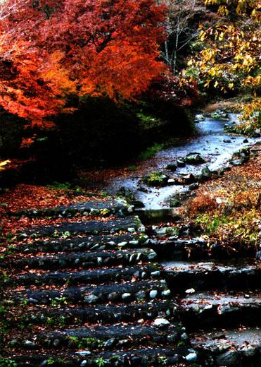 晩秋の払沢