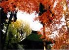 第4回 入選 山門の秋