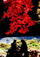 第13回 ネッツトヨタ多摩賞 川辺の秋