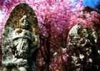 第13回 西武信用金庫賞 優しき春の祈り