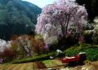 第13回 熟年(75歳以上)部門賞 春の農作業