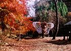 第5回 学生部門賞 晩秋の深沢渓