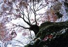 第15回 大多摩ハム賞 半世紀ぶりの雪紅葉