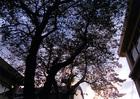 第15回 伊吹グループ賞(中学写真部奨励賞) たくましい木々と美しい空色