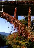 第5回 熟年部門賞(嘉泉の田村酒造場賞) 蔦のはう御岳橋