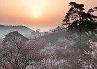 第16回 特別招待作品 梅郷の朝