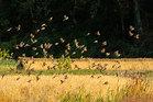 第16回 婦人部門賞(大多摩ハム賞) 飛びたつ雀たち