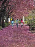第16回 東洋システム賞 花の道