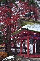 第16回 東京サマーランドA賞 霜月の雪