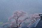 第16回 東京サマーランドA賞 雪化粧