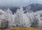 第17回 大多摩観光連盟賞 ある冬の日の登山道