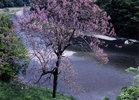 第5回 入選 陽春の多摩川