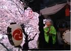第4回 ネッツトヨタ多摩賞 春の宴