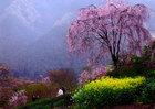 第8回 熟年部門賞(多満自慢の石川酒造賞) 春の山里