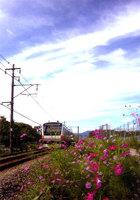 第8回 拝島駅長賞 秋日和快走