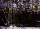 第8回 大多摩ハム賞 渓谷の輝き