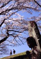 第8回 園芸センター『清水園』賞 桜守