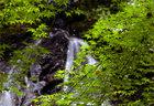 第8回 入選 涼景・白岩の滝