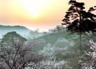 第9回 優秀賞(武陽ガス賞) 梅郷の朝