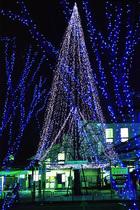 第9回 大多摩ハム賞 大きなツリー