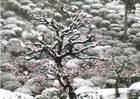 第10回 ネッツトヨタ多摩賞 降雪の庭