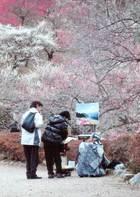 第10回 婦人部門賞(大多摩ハム賞) 里山の春を描く人