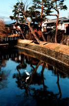 第11回 大多摩ハム賞 玉川上水、或る日の風景。