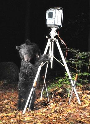 ツキノワグマとカメラ